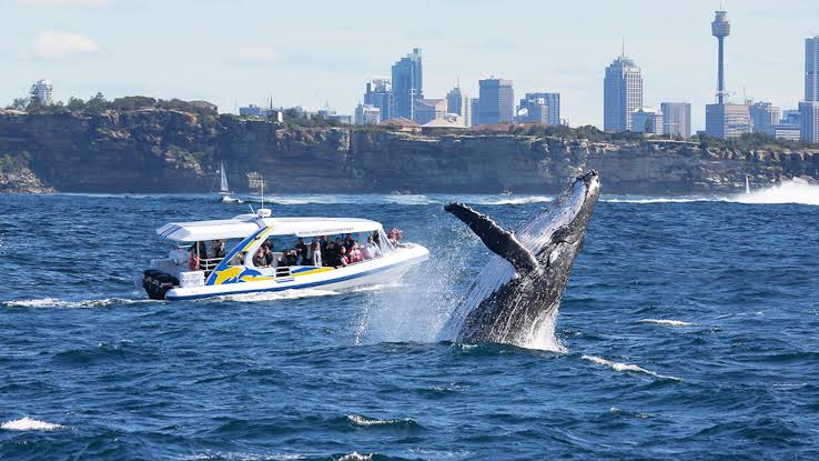 Discover the Beauty of Whale Watching Tours in Sydney