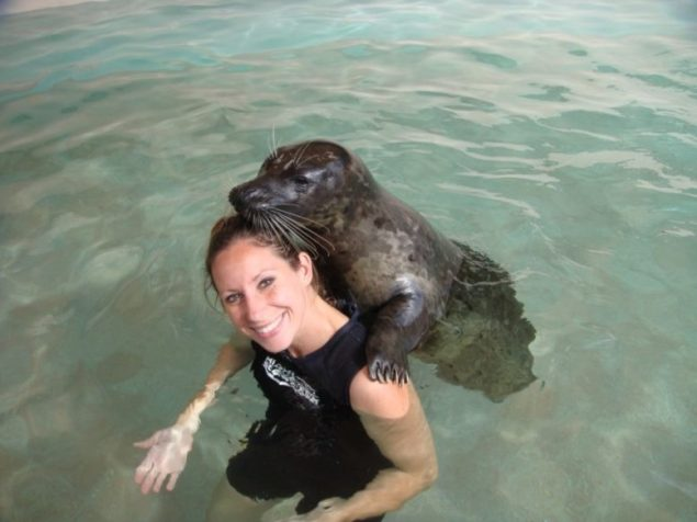 Why You Should Go On a Seal Swimming Excursion